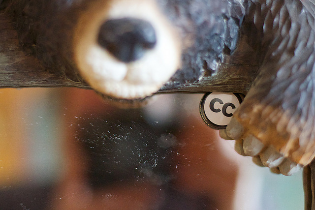 Image of a bear with Creative Commons button