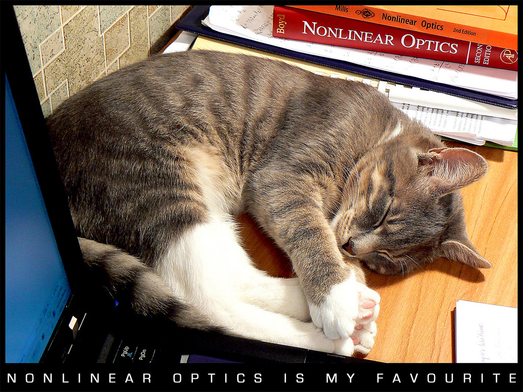 Cat sleeping by Nonlinear optics books.